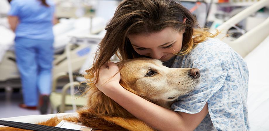 La zoothérapie ou Comment se soigner par les animaux ?